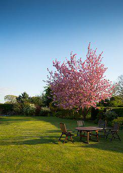Nature, Garden, Lawn, Yard, Chairs, Tables, Grass
