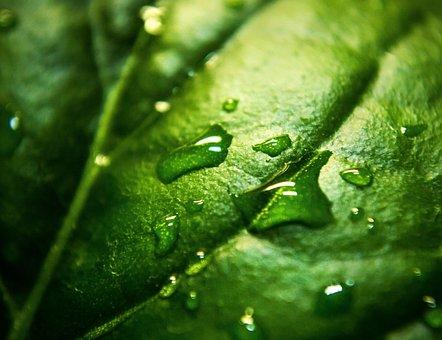 Nature, Plants, Leaves, Veins, Water, Droplets, Rain