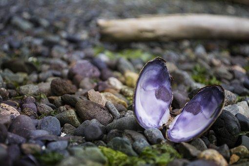 Mussel, Ocean, Pacific, Rocks, Rocky, Beach, Sea, Shell