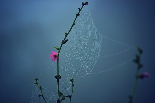 Nature, Flowers, Branches, Stalks, Stems, Spider, Web