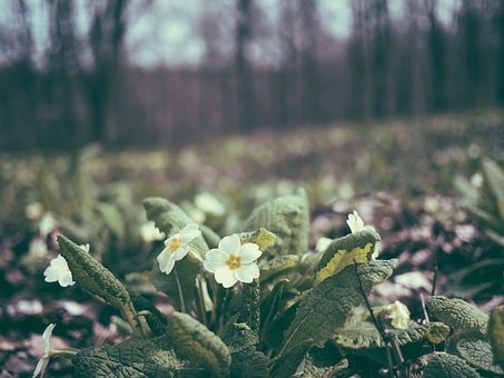 Flowers, Blossoms, White, Stems, Stalks, Petals, Leaves