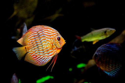 Tropical, Aquarium, Fish, Water, Underwater, Sea