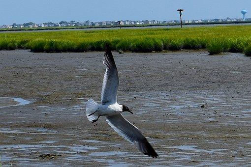 Bird, Seagull, Marshland, Estuary, Water, Grass, Sunny