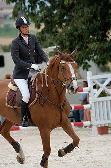 Horse, Ride, Tournament, Reiter, Animal, Human, Brown