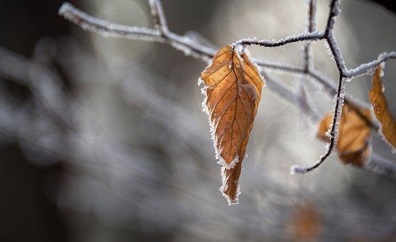 Snow, Autumn, Leaves, Winter, Leaf, Nature, Landscape