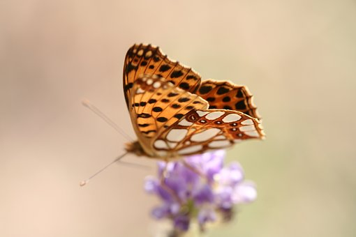 Butterfly, Wing, Beautiful Flower, Macro, Plant, Garden