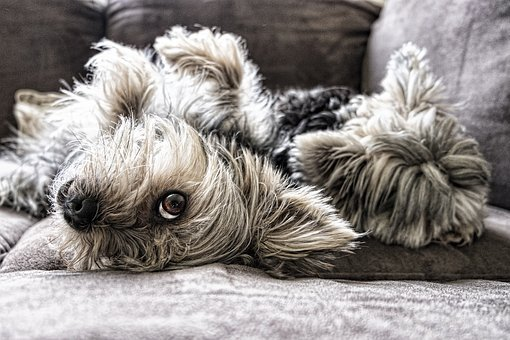 Dogs, Eye, Face, Animal, Cute, Pet, Puppy, Canine