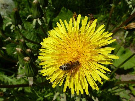 Flower, Bee, Honey Bee, Sprinkle, Blossom, Bloom