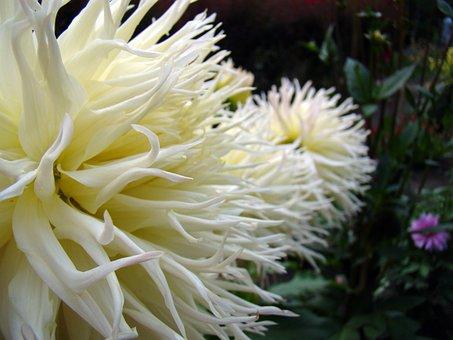 Flower, White World, Exotic Flower, Full Bloom