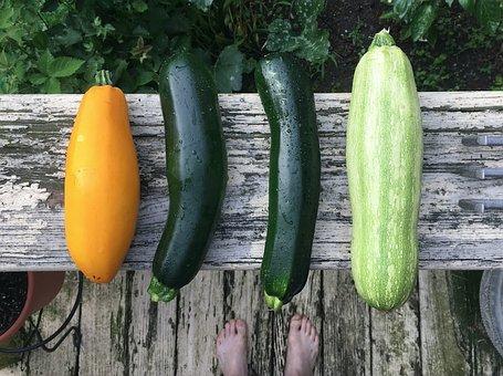 Zucchini, Harvest, Garden Vegetable, Fresh, Organic