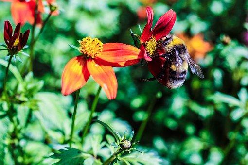 Garden Flower, Bumble Bee, Insect, Flower, Garden