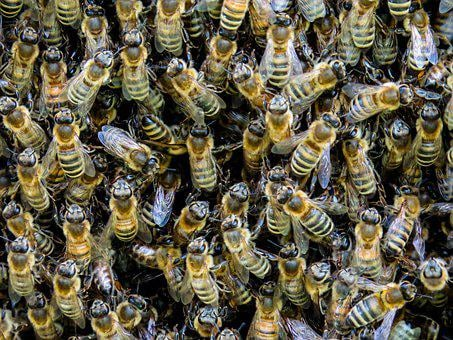 Animal, Insect, Bee, Beehive, Honey, Wing, Meeting