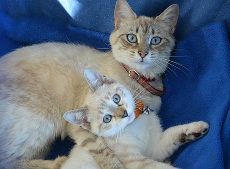 Kitten, Pussy, Kitten With Mom, Domestic Animal, Calm