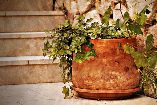 Plant, Tile, Yard, Stair, Mood, Potted Flower