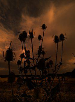 Silhouette, Nature, Thistle, Plant, Mystical, Contrasts
