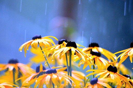 Flowers, Rainy Weather, Flower, Wet, Close, Raindrop