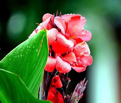 Blueme, Blossom, Bloom, Summer, Nature, Plant, Close