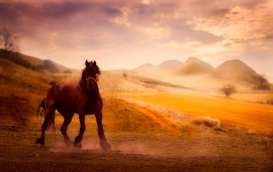 Horse, Animal, Sky, Clouds, Sunset, Dusk, Sunrise