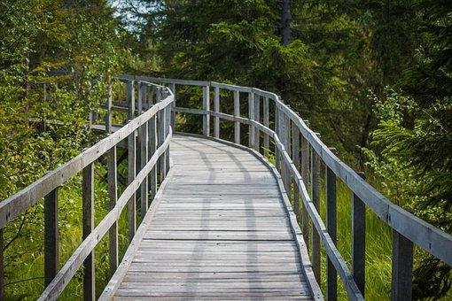 Path, Footbridge, Wooden Walkway, Trees, Nature