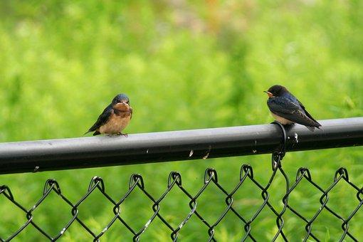 Bird, Robin, Nature, Animal, Cute, Feather, Wildlife