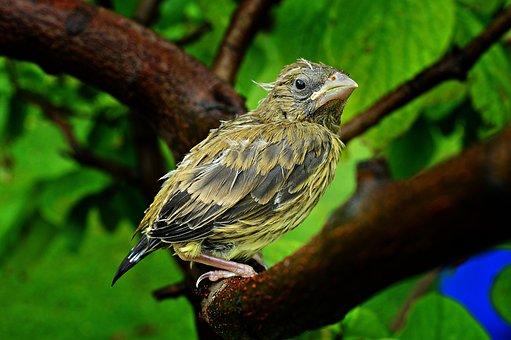 Bird, Bird-chick, Chick, Launchy, Feathered, Birds