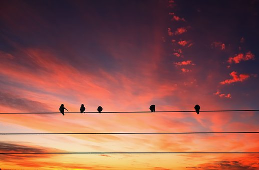 Animals, Birds, Perched, Power Lines, Sky, Clouds