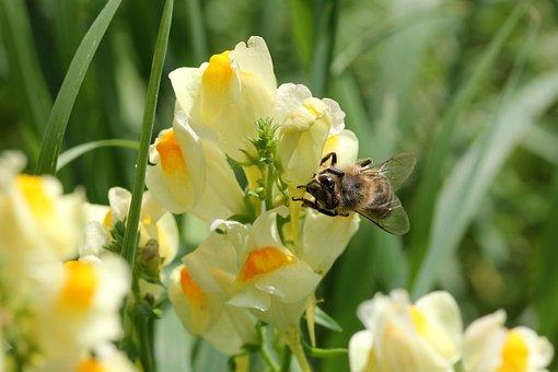 Flower, Bee, Money, Pollination, Blossom, Bloom, Macro