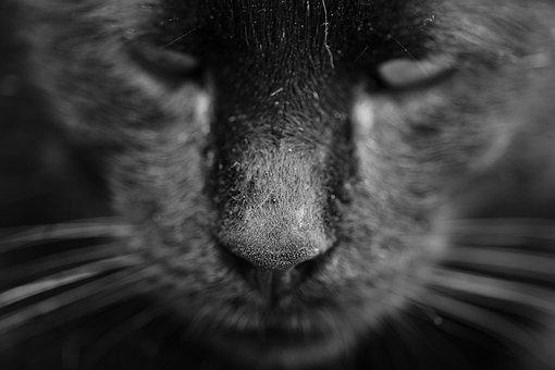 Cat, Animal, Cat Eye, Animal Portrait, Kitty, Animals