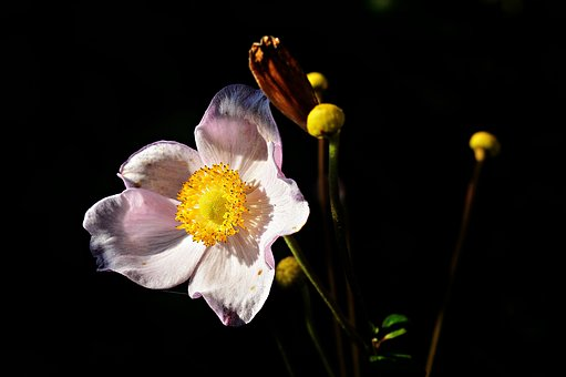Flower, Garden, Flowers, Nature, Summer Flowers, Plant