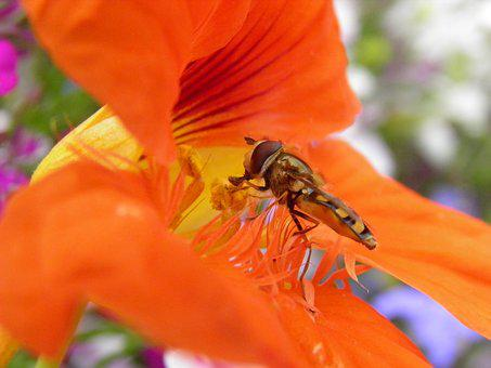 Bug, Nature, Insect, Fly, Plant, Summer, Wildlife