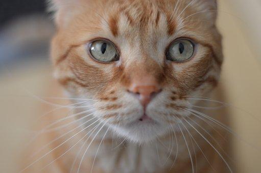 Cat, Animal, Cats, Pet, Animals, Kitten, Gata, Pets