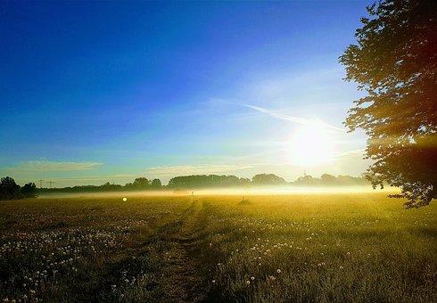 Nature, Fog, Landscape, Mood, Morning