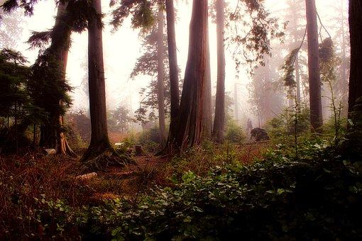 Landscape, Forest, Trees, Woods, Morning, Sunrise, Fog