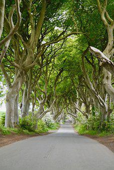Ireland, The Dark Hedges, Beech, Trees, Mystical, Old