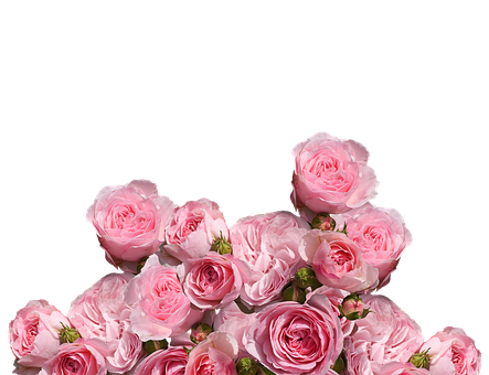 Roses, Love, Wedding, Romantic, Rose Bloom, Pink