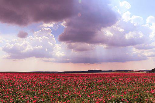 Flowers, Field, Clouds, Poppy, Nature, Sky, Red Flowers