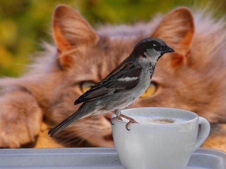 Sparrow, Bird, Coffee, Cup, Cat, Lurking, Risk, Mood