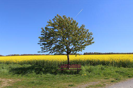 Bank, Summer, Rest, Bench, Oilseed Rape, Recovery