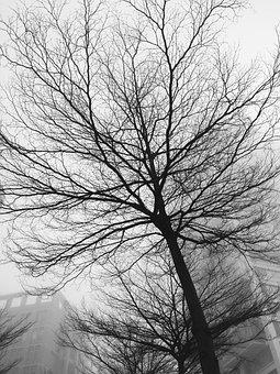 Black And White, Trees, Morning, Fog, Grain