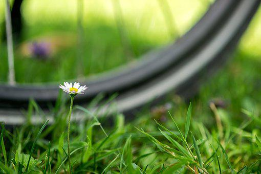 Bicycle Tour, Macro, Geese Flower, Mature, Wheel, Daisy
