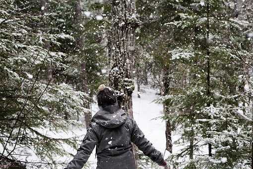 Snow, Snowing, Cold, Winter, Outdoors, Forest, Woods