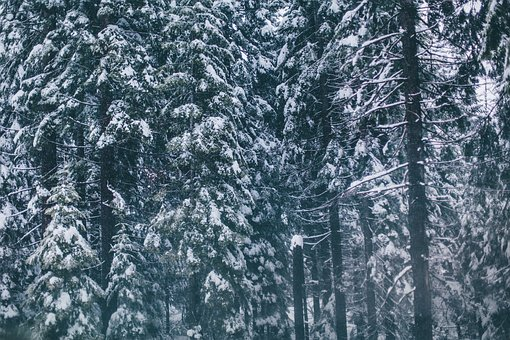 Snow, Cold, Winter, Trees, Forest, Woods
