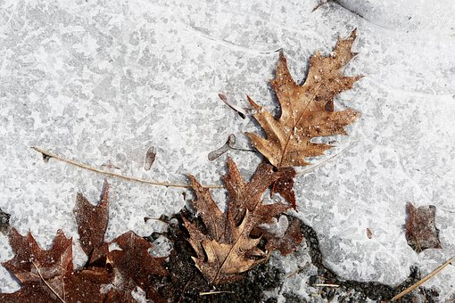 Ice, Snow, Ground, Leaves, Winter, Frozen