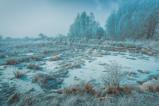 Winter, Snow, Cold, Nature, Outdoors, Trees, Forest