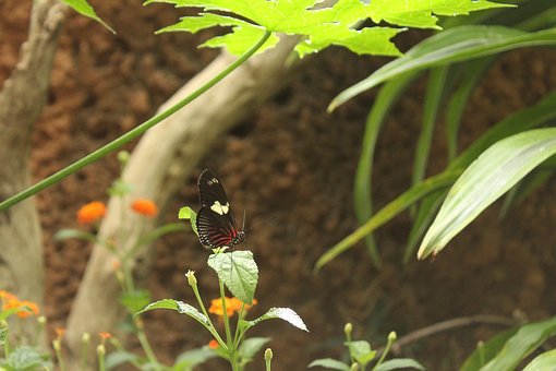 Butterfly, Outdoor, Springtime, Macro, Nature, Green