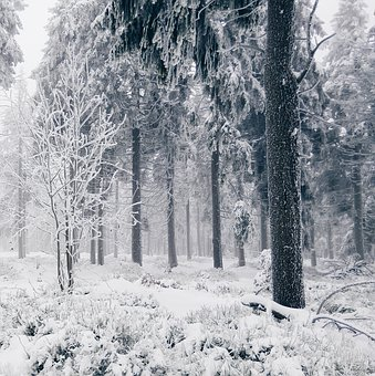 Snow, Winter, Cold, Trees, Forest, Woods