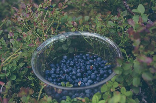 Blueberries, Fruits, Healthy, Food, Nature, Leaves