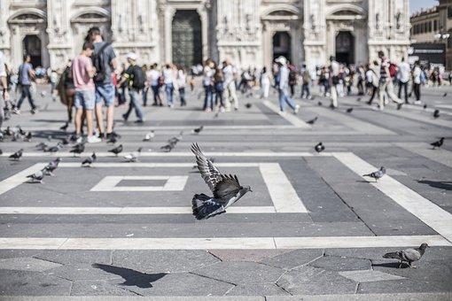 Birds, Pigeons, Animals, People, Crowd, Tourists