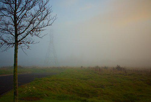 Grass, Field, Trees, Power Lines, Electricity, Foggy