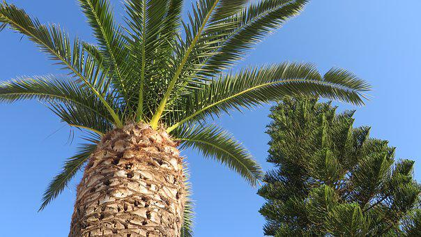 Palm Tree, Relaxation, Summer, Vacation